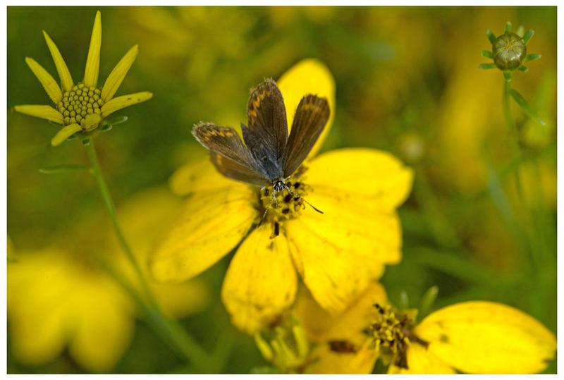 Sinfonie in gelb ...