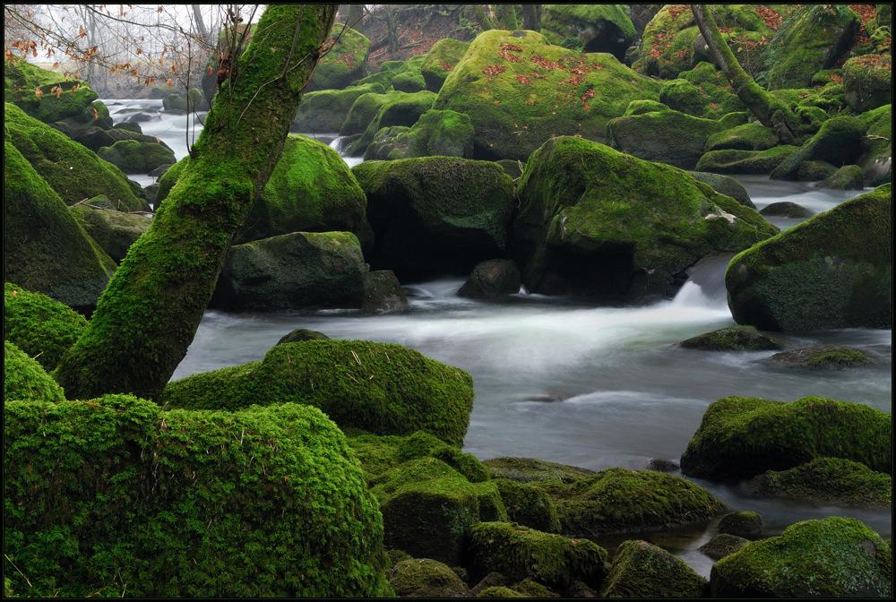 Sinfonie in grün (II)