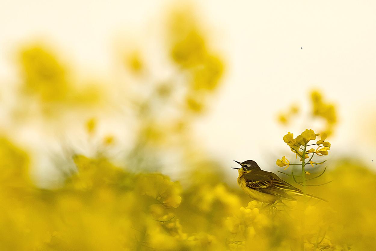Sing mir ein Lied ......