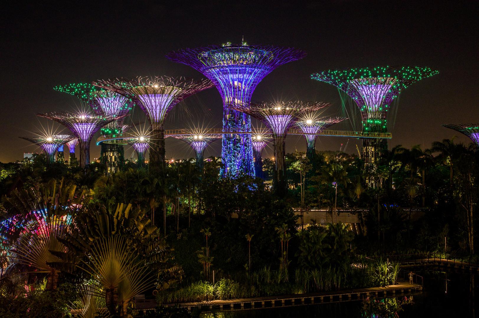 Singapore by Night (XV)