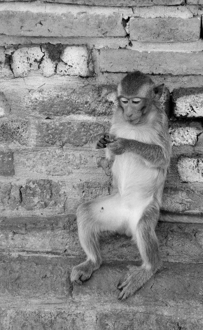singe tranquille