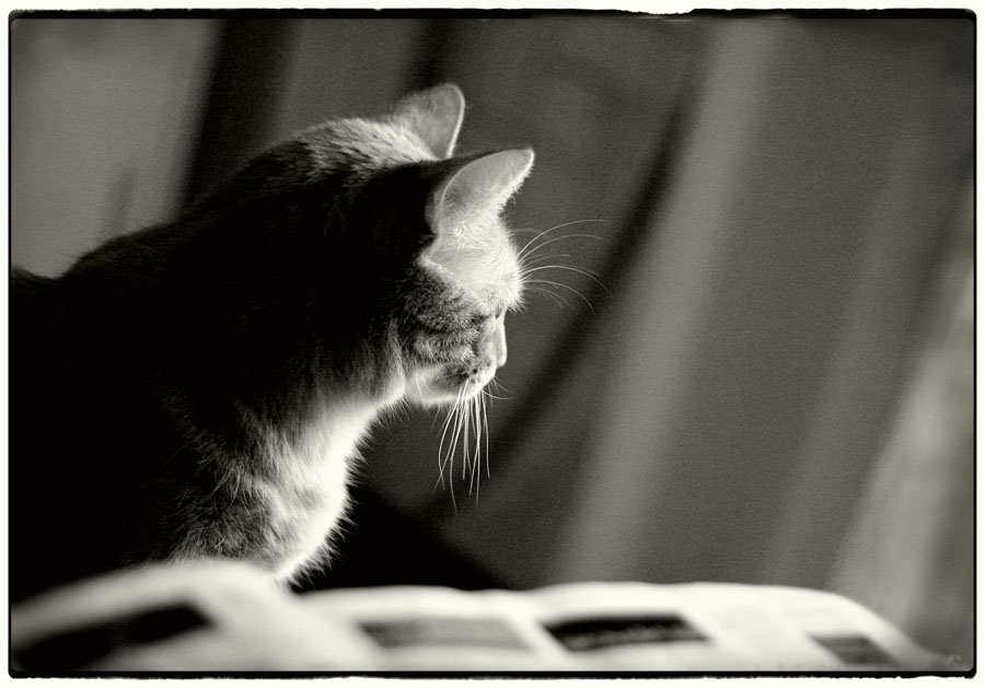 Sinnen einer Katze