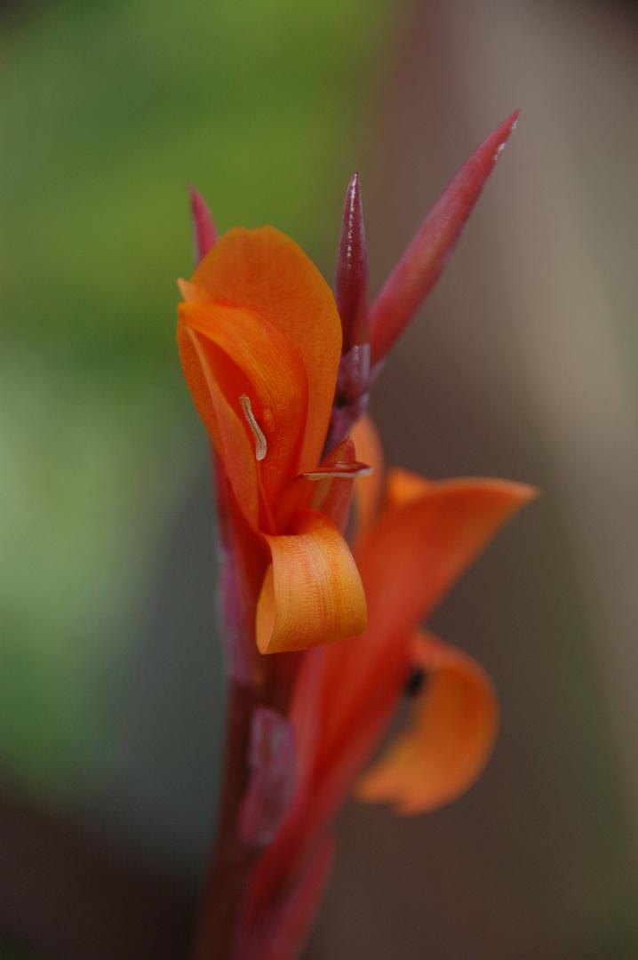 Sinnlich-floral
