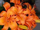 Sinnlichkeit der Blüte