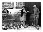 Sintra - Tauben füttern