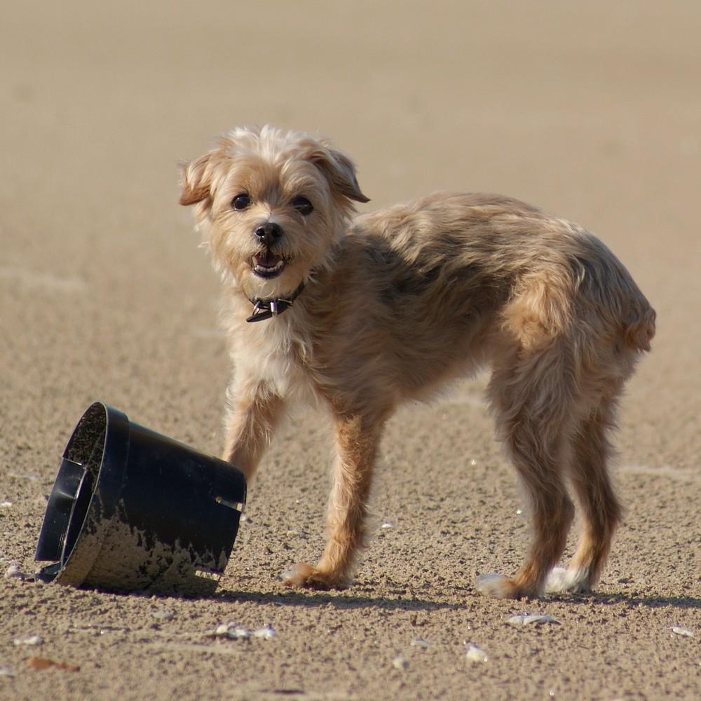Siouxie à la plage