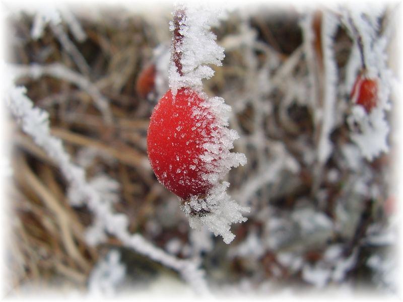 sipek / frozen hip