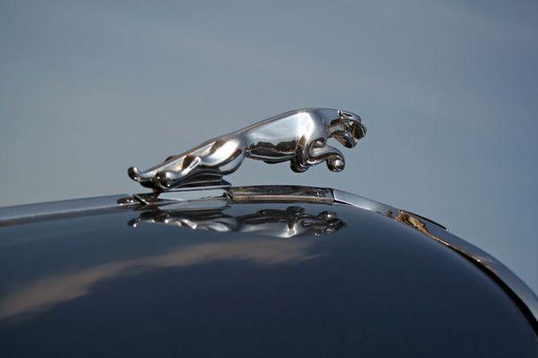 Sir Jaguar
