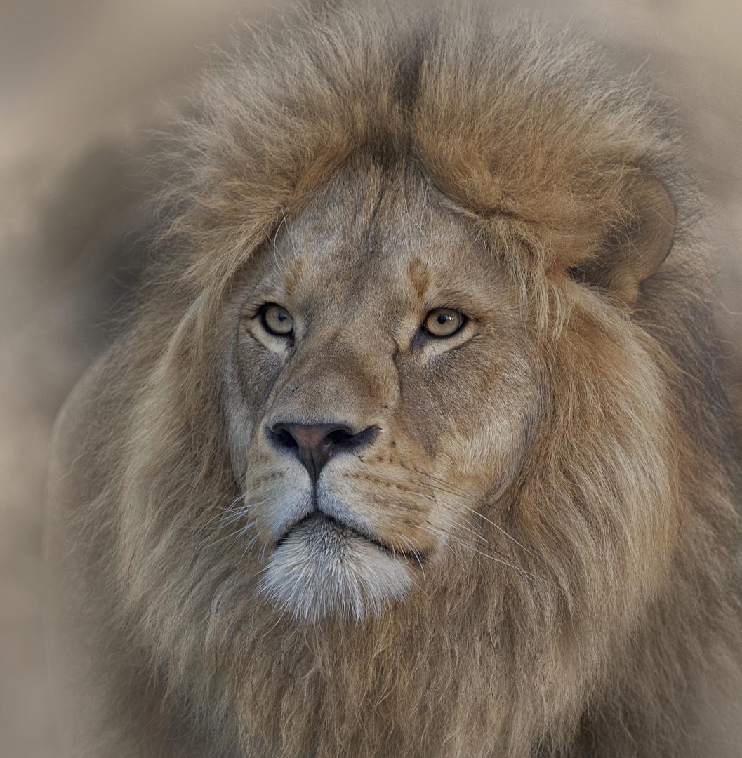 Sir King
