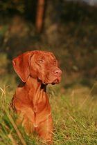 Sir Oscar im Herbstgras