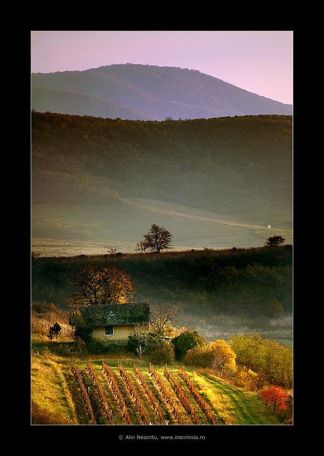 Siria's Hills