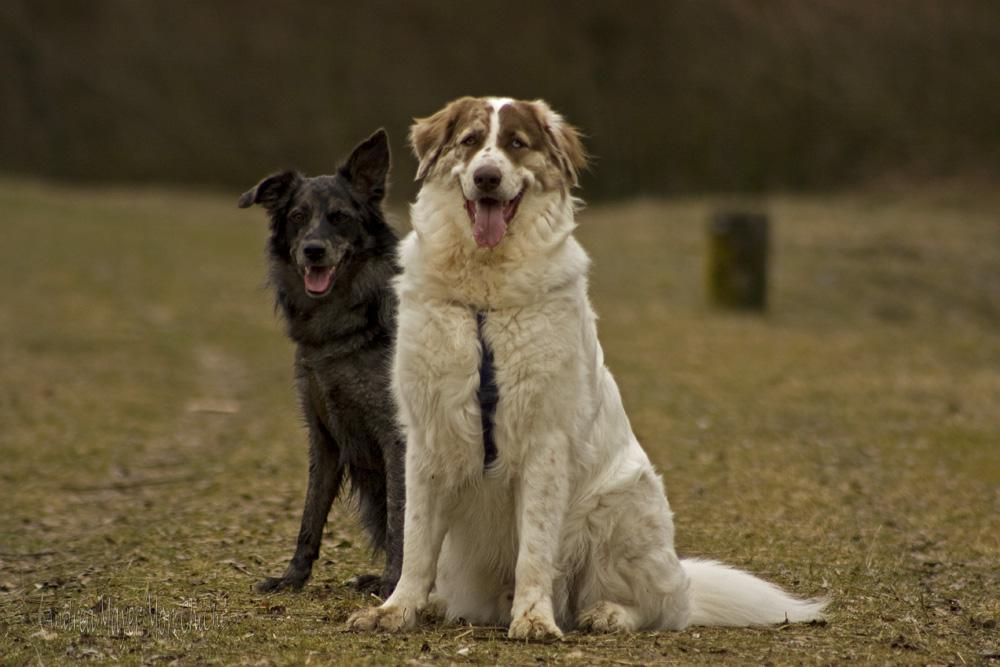 Sissi und Gizmo I