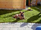 Sissy beim Sonnenbad im Garten