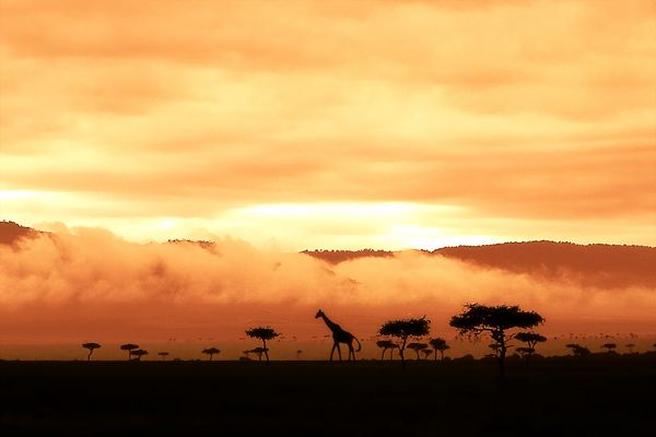 six o´clock in Kenya (Masai Mara) 2