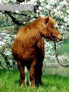 sk-pferdefotografie
