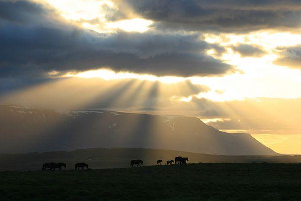Skagafjörður - Pferdeland