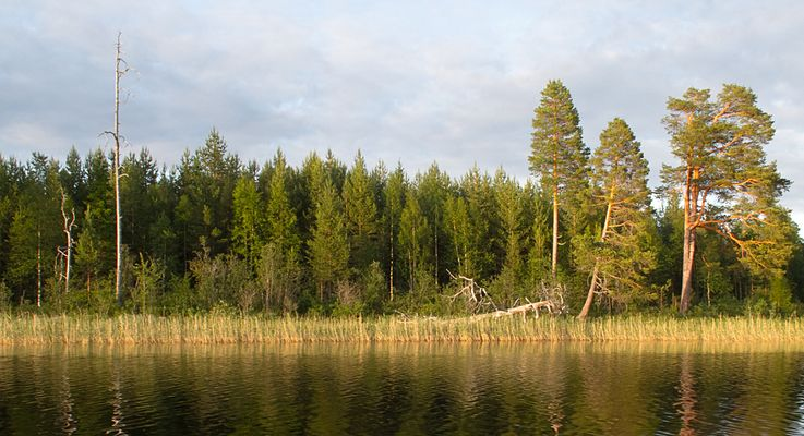 Skallån - Schweden