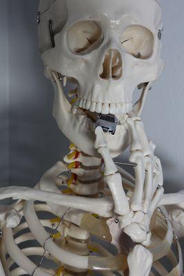 Skelettaudi