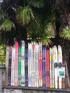 Ski unter Palmen ...