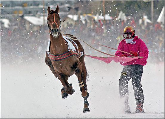 Skikjöring - der Sport für die Harten