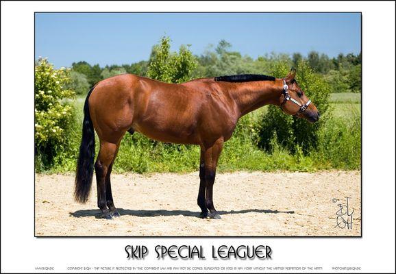 Skip Special Leaguer - 2 (Reload)