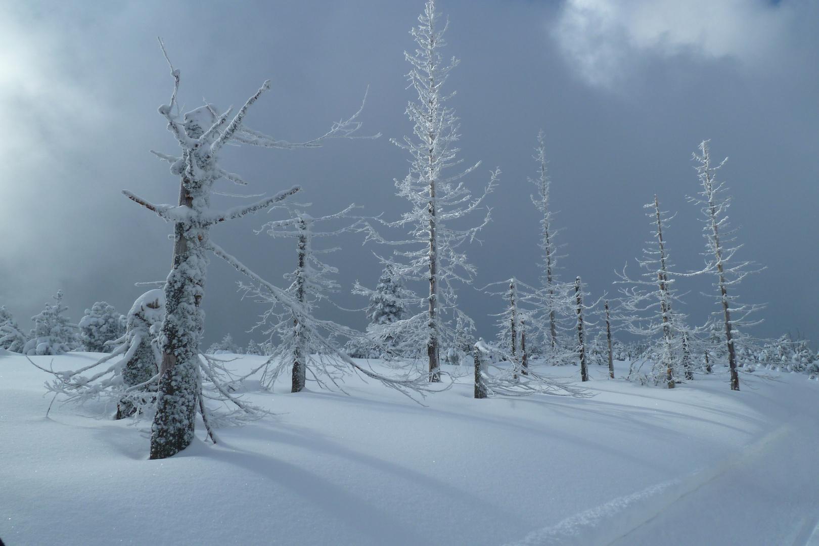 Skitour im schönen Schwarzwald