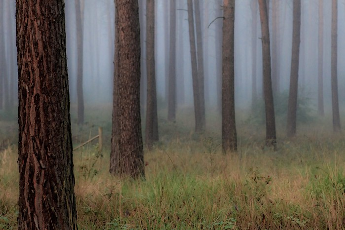 *skogen*