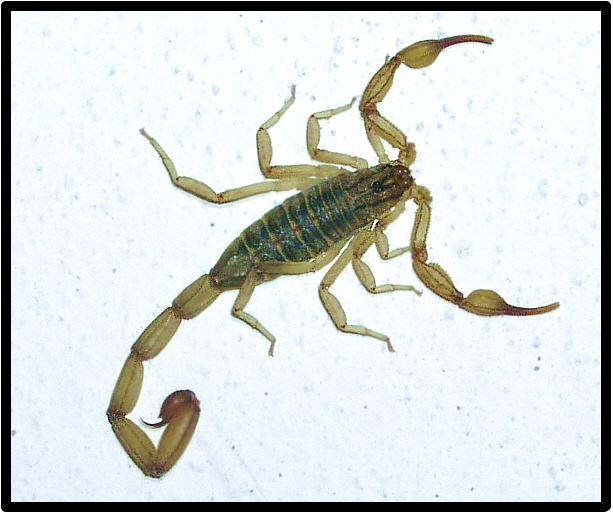 Skorpion ...ausm Bett