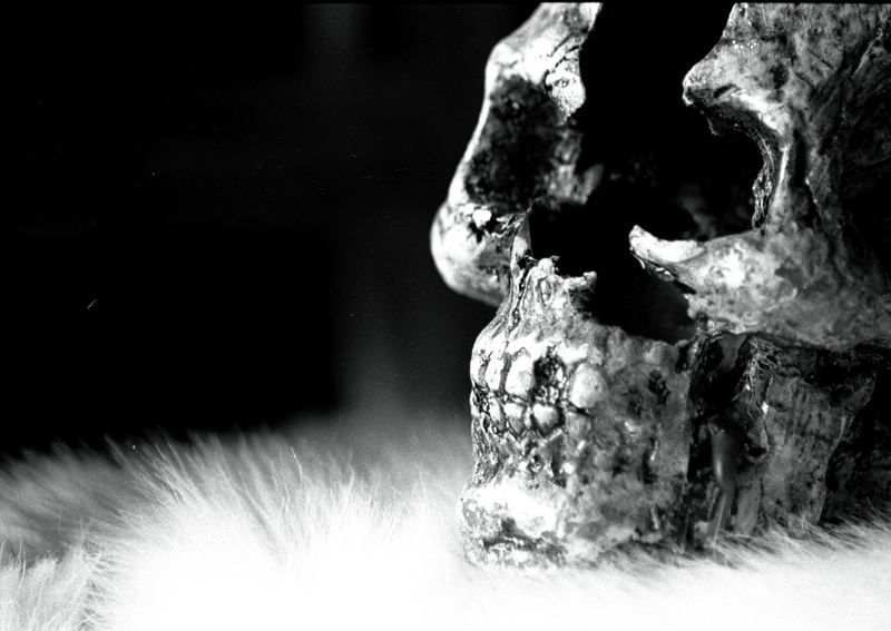 skull and fur