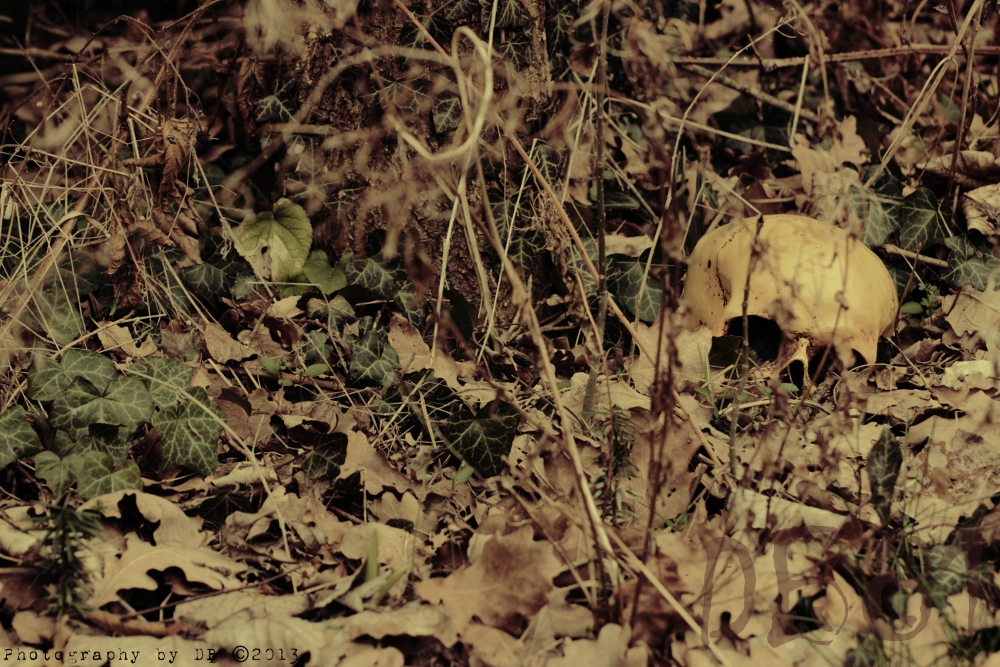 Skull 'n' Leaves