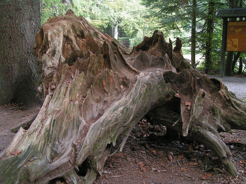 Skulptur im Wald