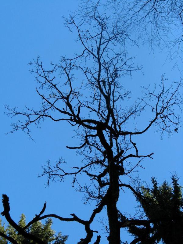 skuriler Baum nach Kyrill