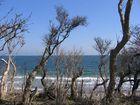 Skurrile Bäume versus steife Brise