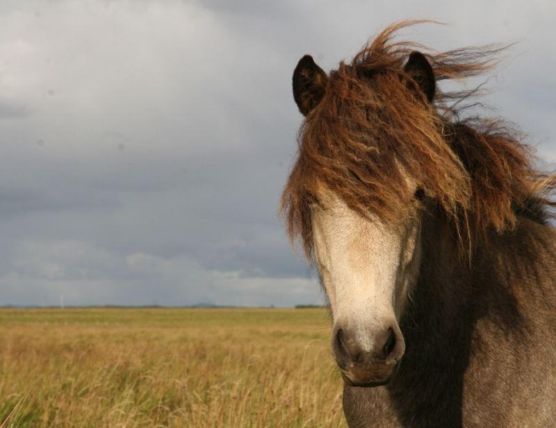 Skvisa - Pferd einer Freundin