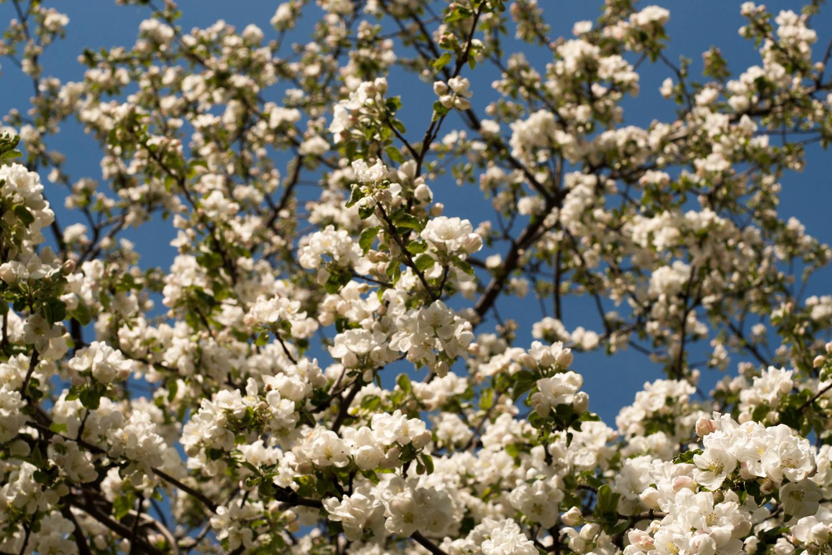 Sky in spring