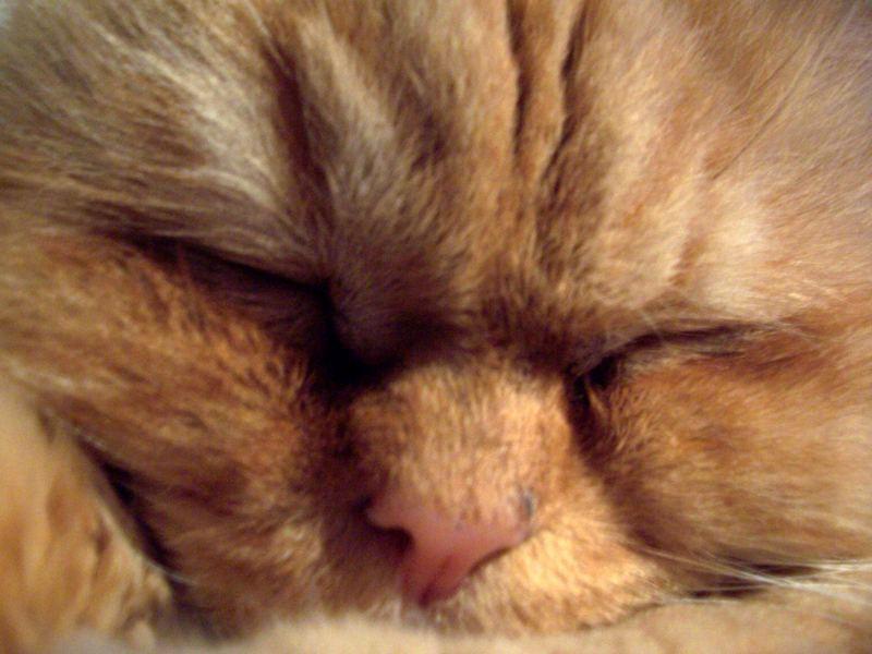 sleep very well