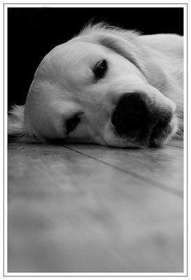 sleeping b.