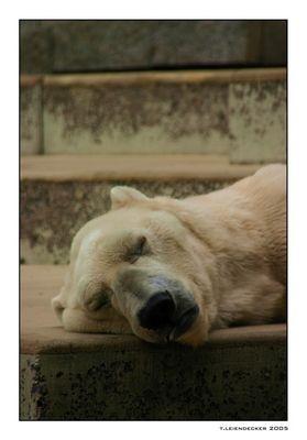 ~~ sleeping ~~