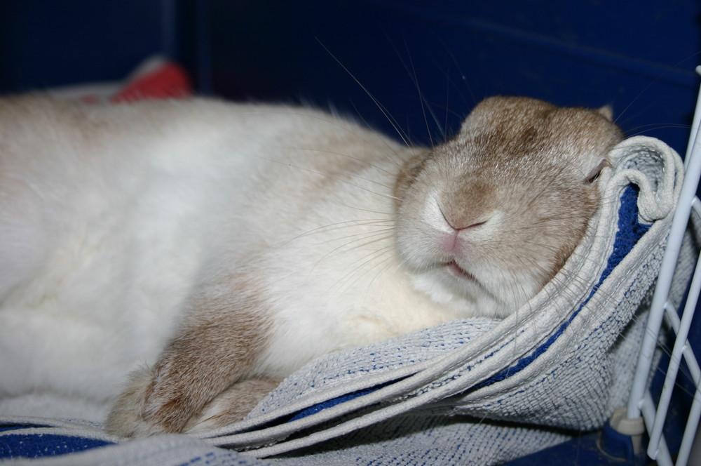 sleeping Bacardi