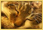 Sleeping Beauty ^_^