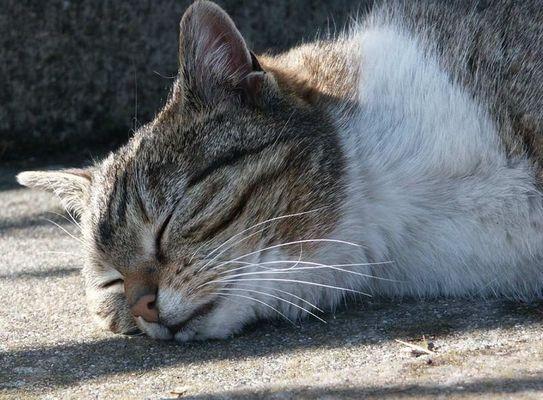 Sleeping in the sunlight