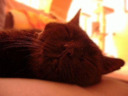 Sleeping Salem