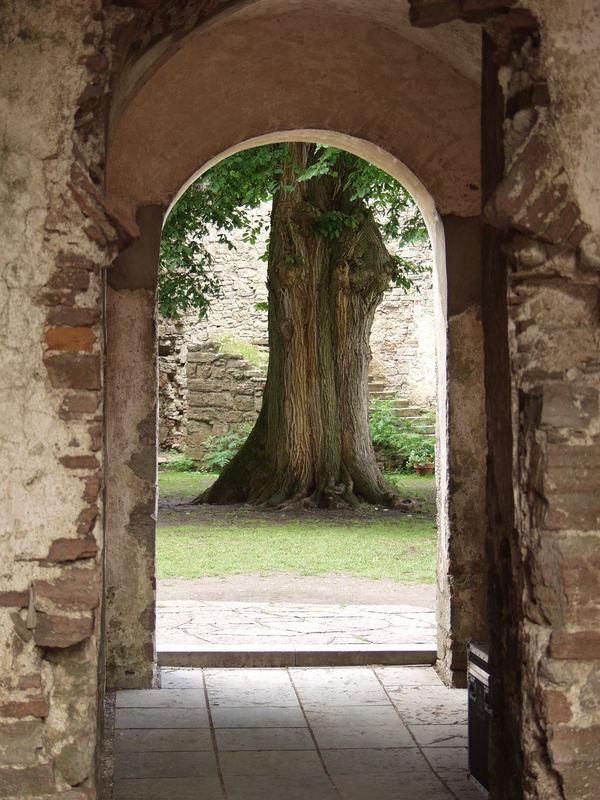 Slot Borgholm Baum im Innenhof