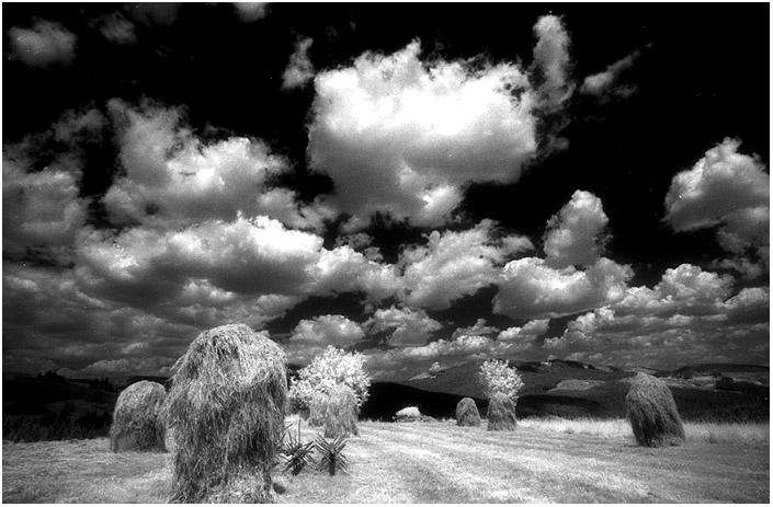 "slovakia#5010 ""Harvest in Slovakia"""