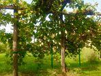 slovenische Gärten
