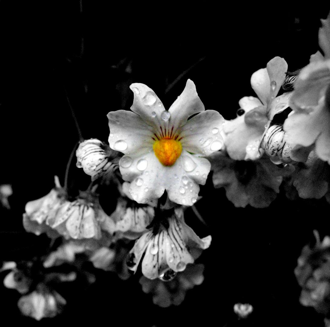Smal Flower