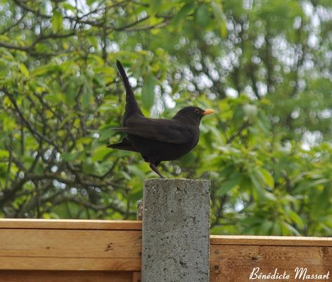 Small black bird ...
