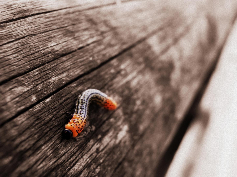 small creature