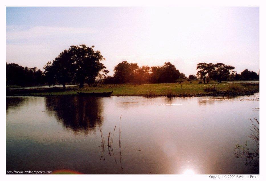 Small lake in Anuradhapura, Sri Lanka