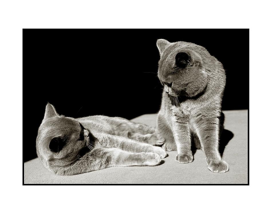 Small-Talk unter Katzen ???